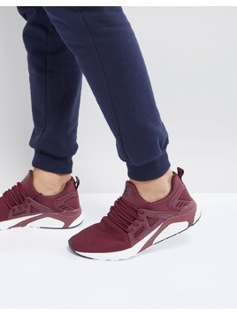 Certified London Knitted Trainers In Burgundy - Red